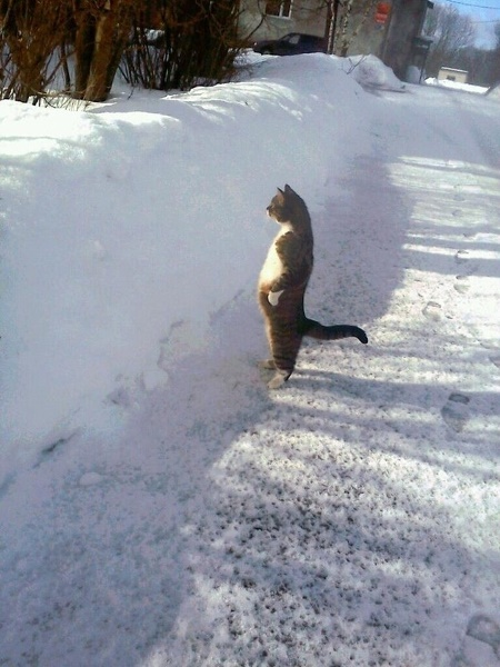 Cat Looking over a Snow Bank